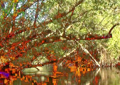 uishet, branches