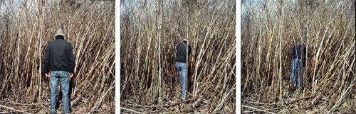 Marc Tallec - disparition(s) // triptyque, partir au végétal, se fondre au naturel et disparaître